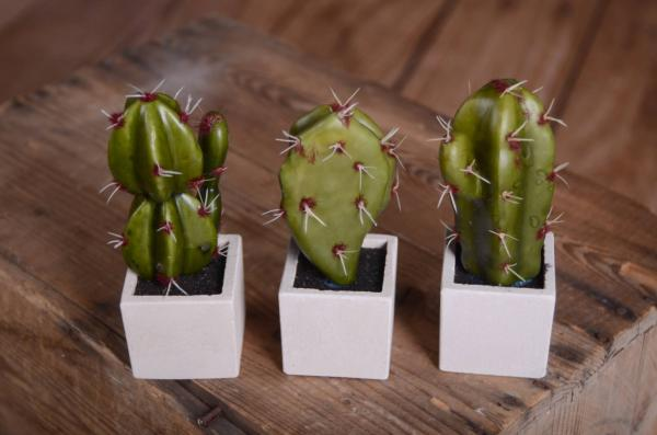 Pack three cactus-model 2