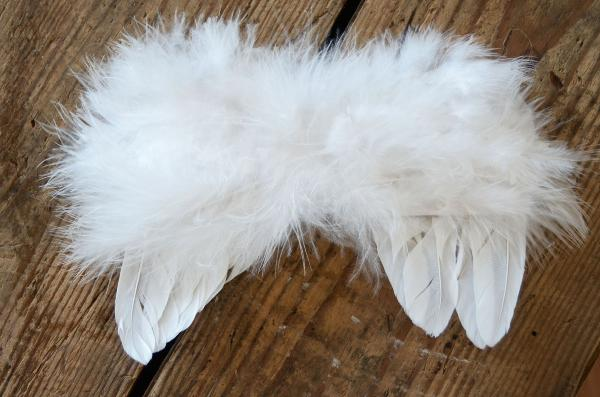 White feathers little angel wings